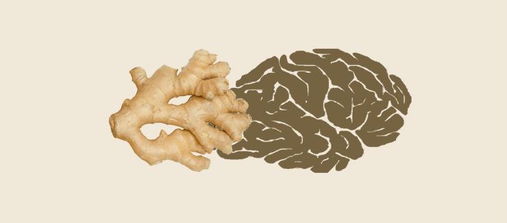 Ingefära kan skydda hjärnan